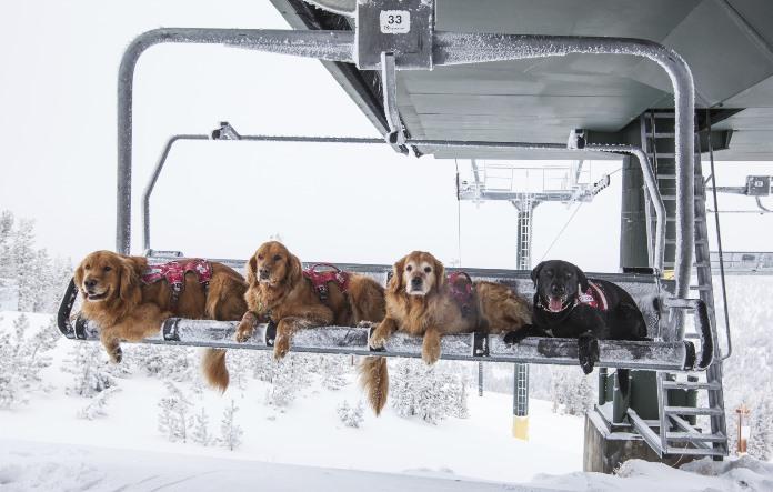 Ski patrol dogs at Heavenly